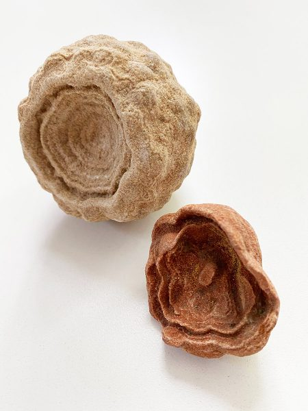 Concentric Circle Fossils